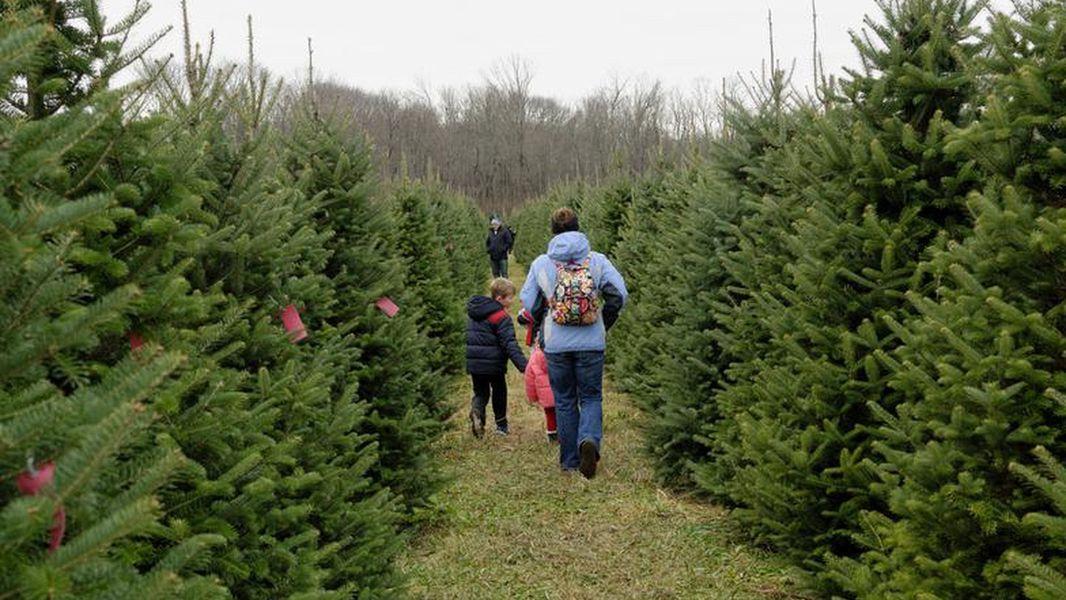 Where To Buy Fresh Cut Christmas Trees Springfield